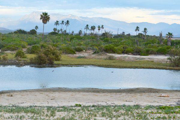 oasis-laspalmas6