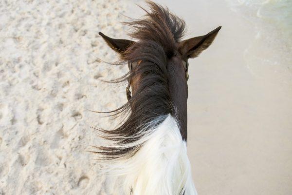 horseriding-4